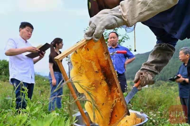 浙江媒體來了 廣元老鄉遞上一杯蜂蜜水