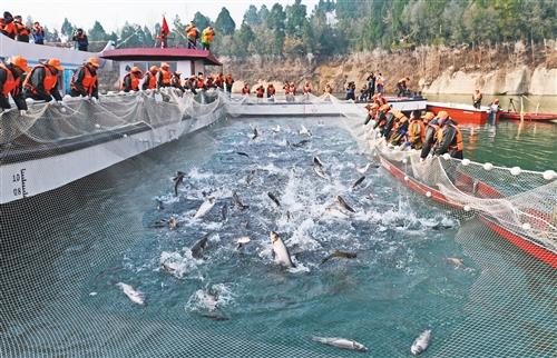 """中国渔业何以""""减量增收"""""""